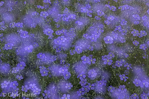 Canada, British Columbia, flower abstractions,