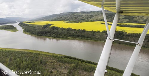 Canada, British Columbia, Peace River Country, canola crop, Peace River,