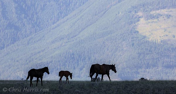 Canada, British Columbia, Fraser River Canyon, grasslands,
