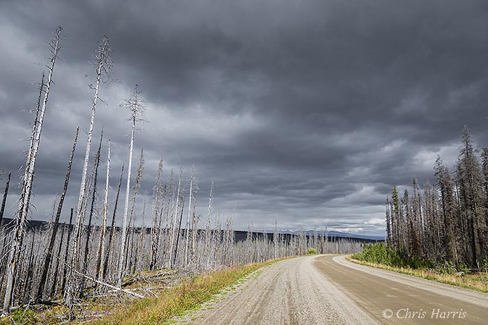 Canada, British Columbia, Highway 24, Freedom Highway, Tweedsmuir Park, burnt forest,